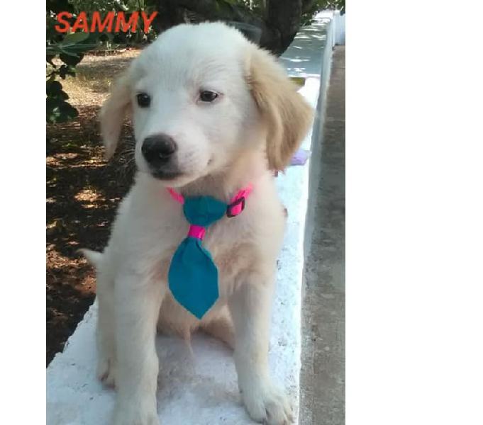 Cuccioli taglia medio piccola cercano casa