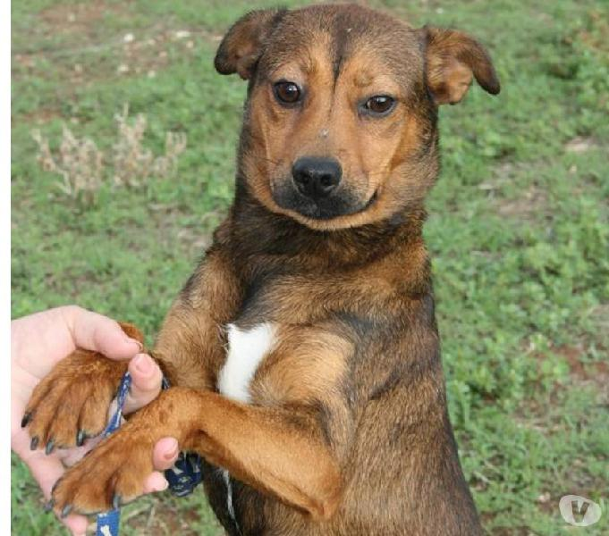 Facciamo sorridere heidi la cagnolina più dolce che c'è?