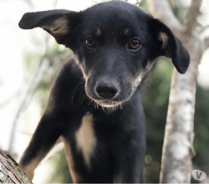 Pupo dolce cucciolo