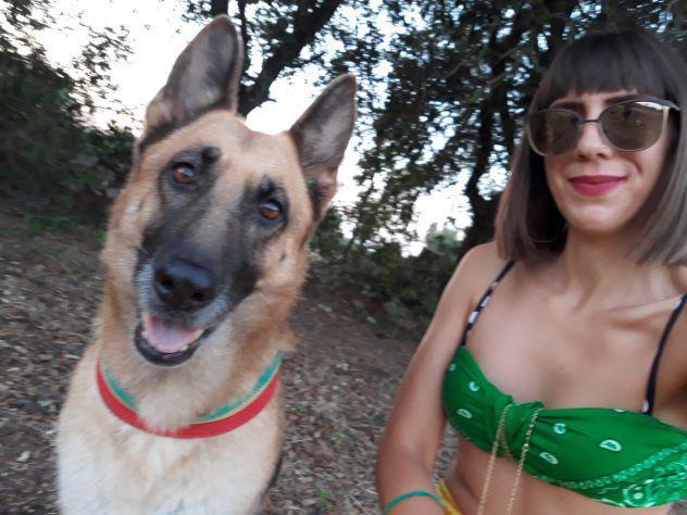 Dog sitter, pensione animali