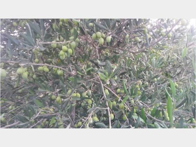 Privato terreno coltivabile mq12500
