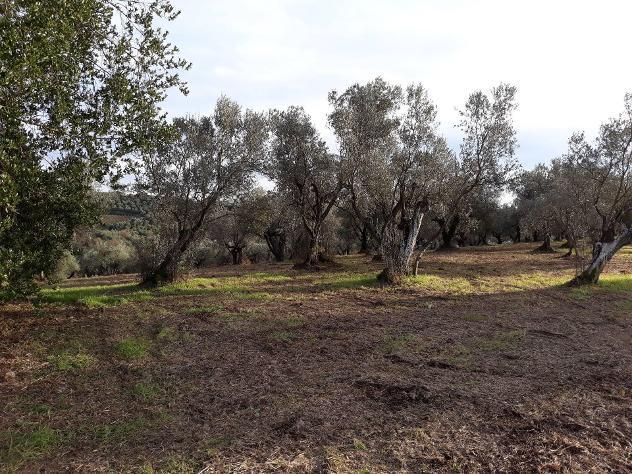 Terreno agricolo in vendita a cerreto guidi 95000 mq rif: