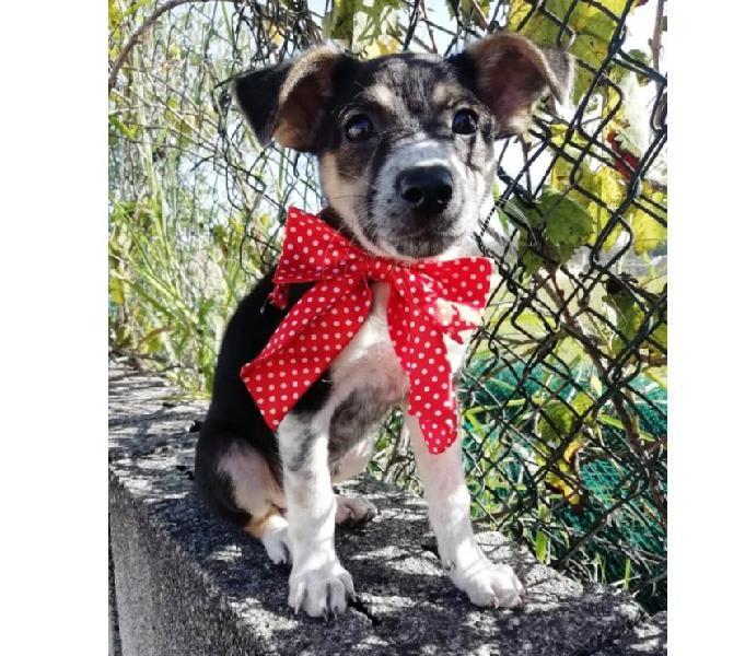 Adorabile cucciolotta