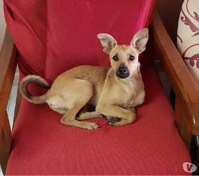 Ermes, un dolce cucciolo taglia piccola, cerca casa
