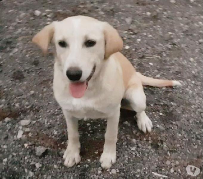 Chicco cucciolo meraviglioso