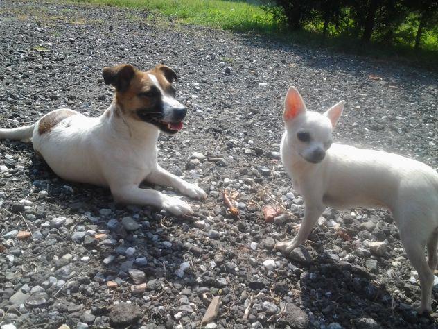 Badante animali domestici - pensione cani