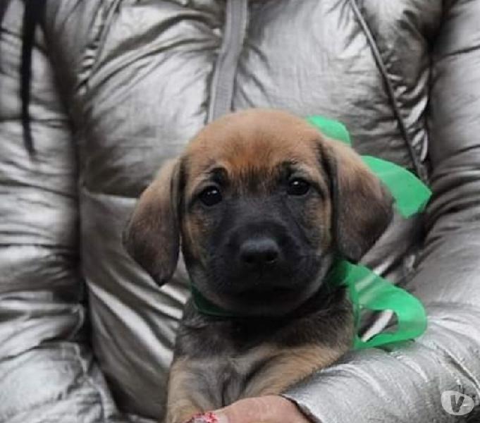 Rudolf 2 mesi in adozione
