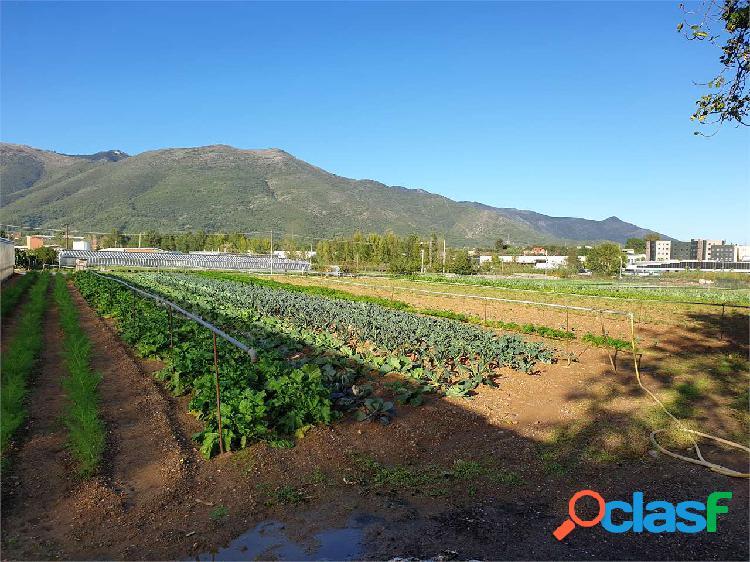 Terreno agricolo di 3280 mq con serra di 1700 mq
