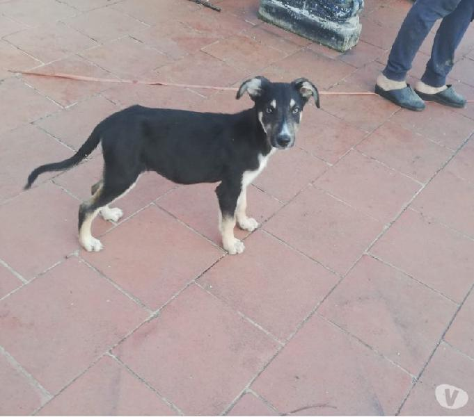 Bellissima cucciola cerca famiglia