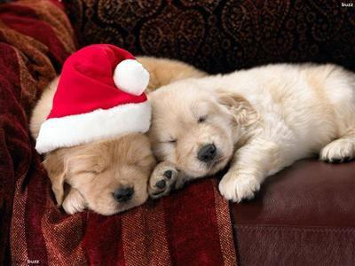 Dog sitter/cat sitter socia enpa anche festività