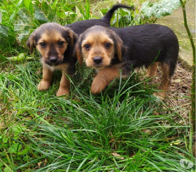 Cuccioli maschi- 3mesi