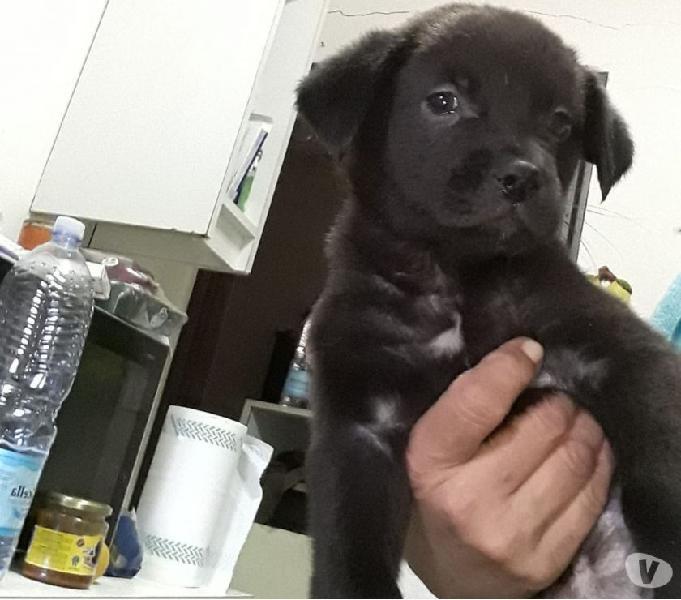 Cucciolina taglia piccola cerca la sua famiglia