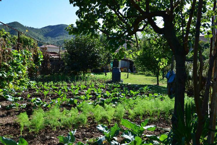 Agricolo a Vado Ligure