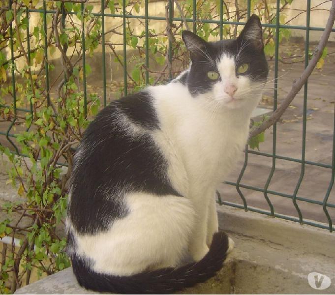 Smarrito gatto bianco e nero in Bari via Toma