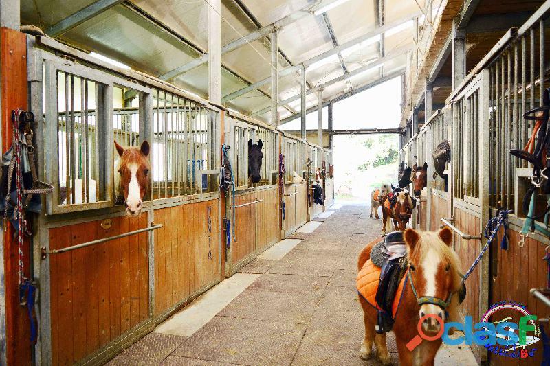 Pensione cavalli e pony   la valle del bo'