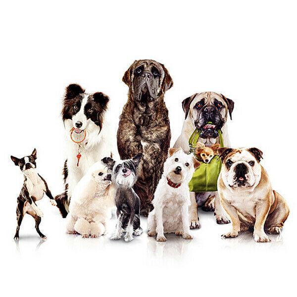 Corsi di formazione gratuito per animal care