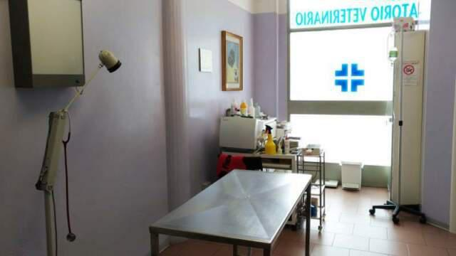 Cedo ambulatorio veterinario