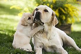 Servizio pensione per cani vacanze natalizie e/o capodanno