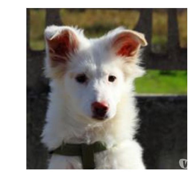Camillo dolce cucciolo cerca una famiglia in cui crescere