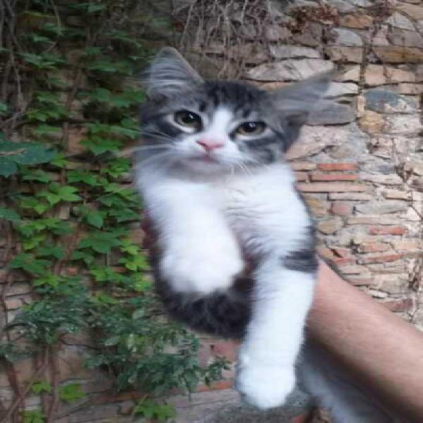 Gattini di 3 mesi da adottare