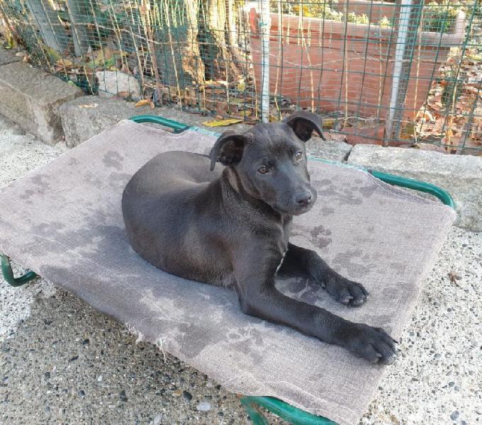 Zuleika, cucciola di quattro mesi taglia media,