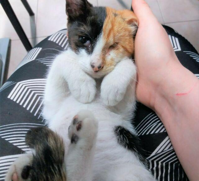 Adozione del cuore per gattina senza occhietto!