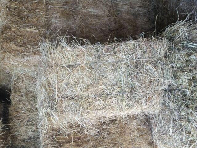 Fieno primo taglio per cavalli, mucche, pecore.