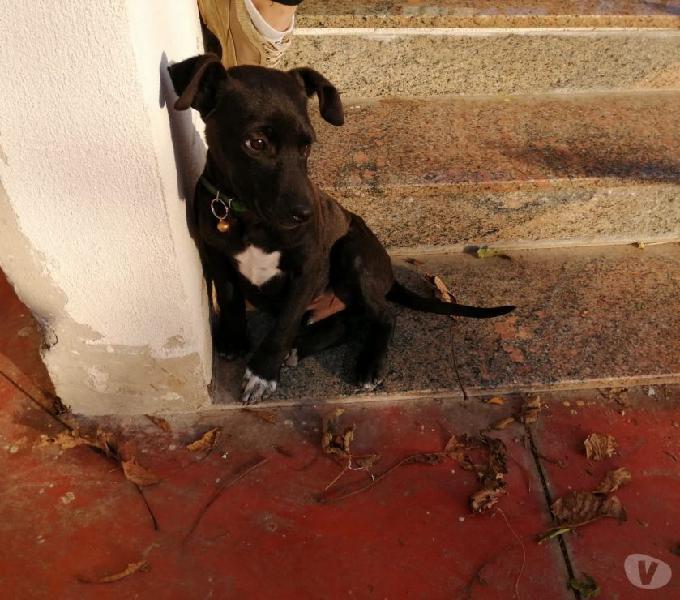 Adozione cane taglia medio contenuta