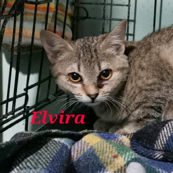 Elvira e mozart micine di cinque mesi