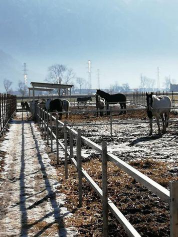 Pensione per cavalli a paddock.