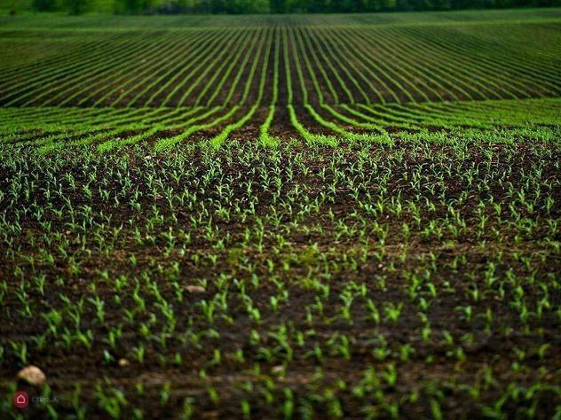 Terreno agricolo in vendita a romano canavese