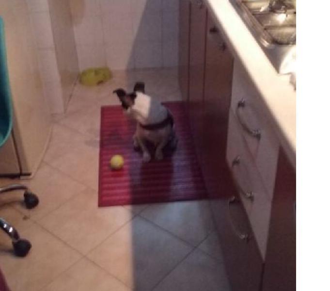 Regalo cucciolo meticcio di due anni ad amanti animali