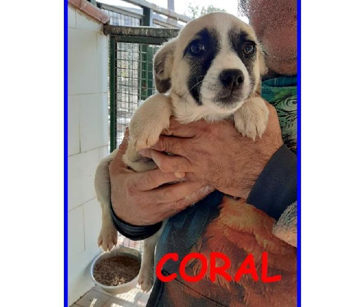 Coral, tenera cucciola 3 mesi e mezzo cerca una mamma umana