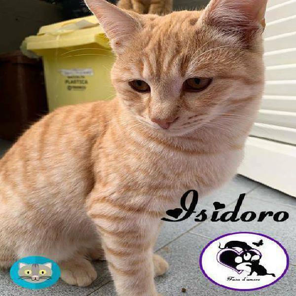 Isidoro adorabile micio da adottare!