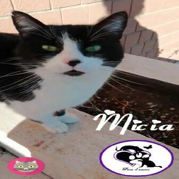 Micia, gatta coccolona da adottare!