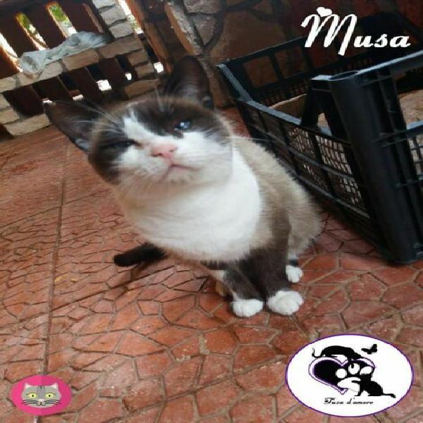 Musa, affettuosa micia in adozione!