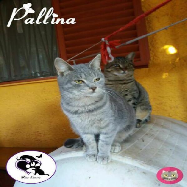 Pallina, adorabile micina in adozione!