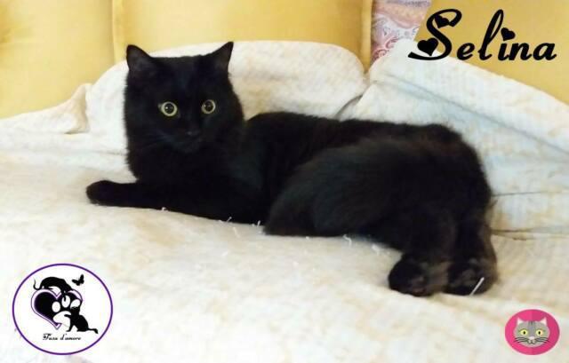 Selina, adorabile micia nera in adozione !