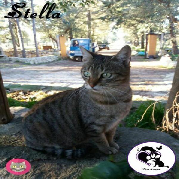 Stella, dolce gatta in adozione!