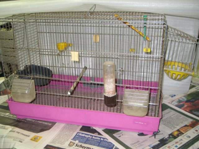 Gabbia / gabbietta 55x36x28 per uccellini o piccoli animali