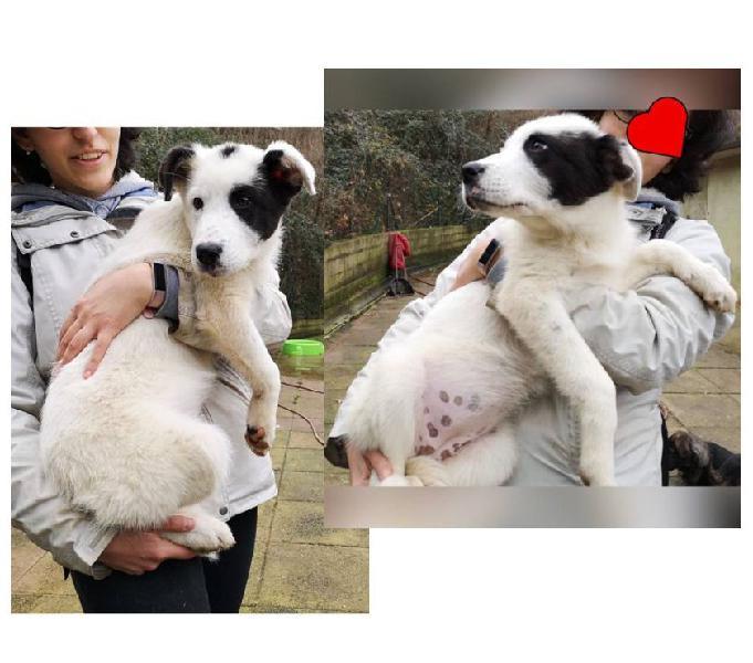 Panda 3mesi cucciola abbandonata al suo destino