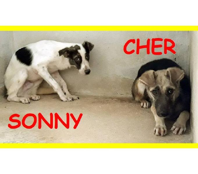 Sonny e cher 2anni spaventati!