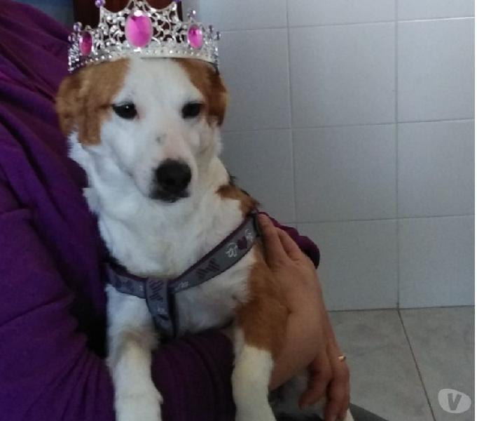 Lola simil jack russel 6 kg 16 mesi