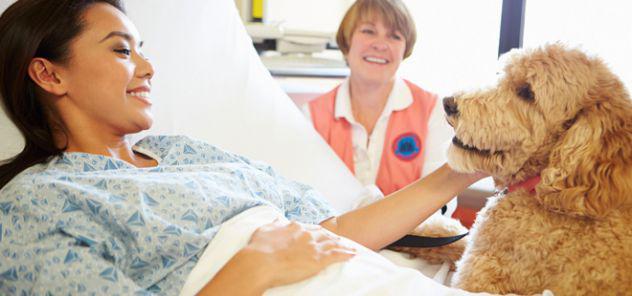 Corso base per coadiutore del cane e animali di affezione