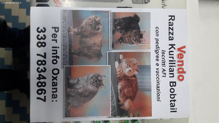 Offro gatti