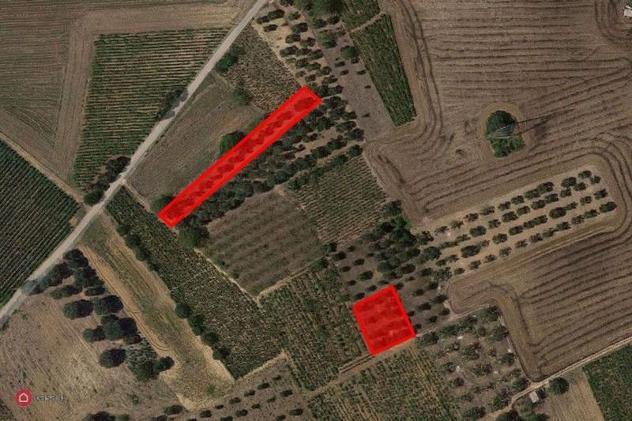 Terreno agricolo in vendita a salice salentino