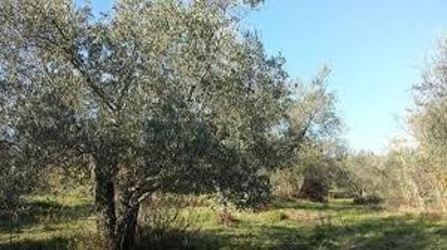 Terreno agricolo in vendita a Calci 5000 mq Rif: 880173