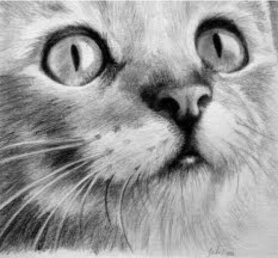 Cat sitter a livorno