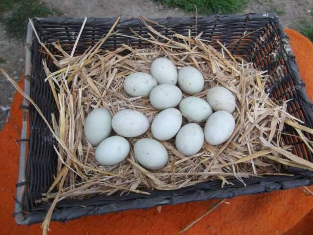 Uova di gallina e anitra