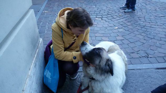 Dog e cat sitter passeggiate e pensione animali